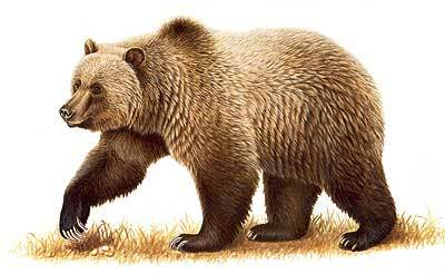Cole (Bear Form) (Shifters)